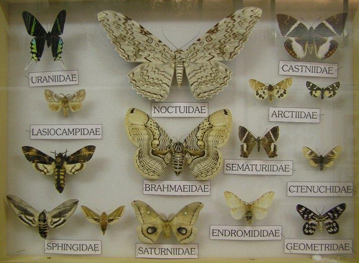 Giardino farfalle