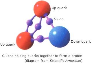 gluoni