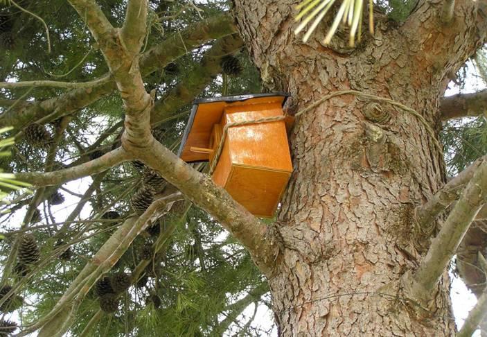 nidi artificiali - artificial nest